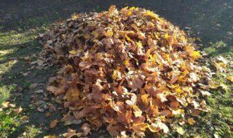 сухе жовте листя