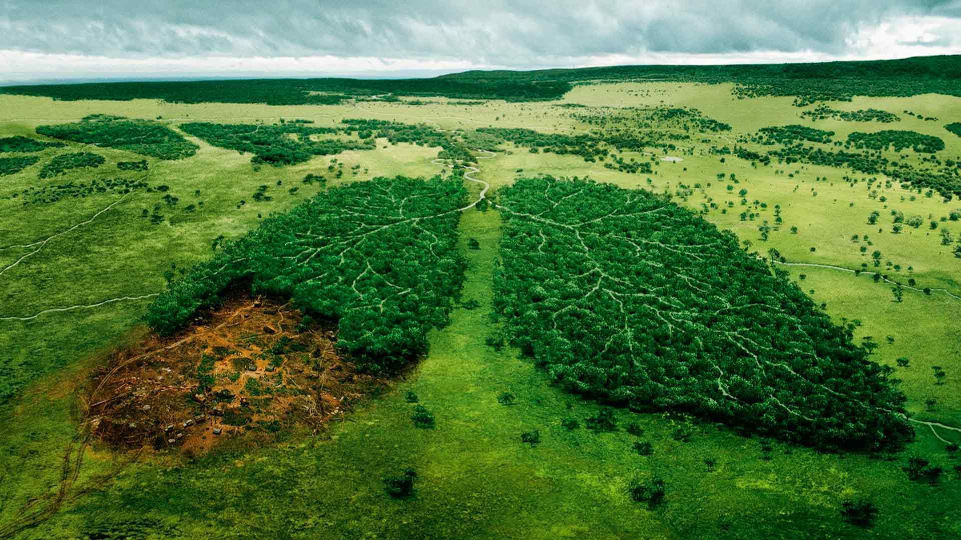 вирубка тропічних лісів
