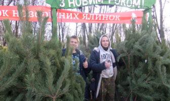 новорічні дерева