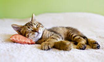 Секрети засинання