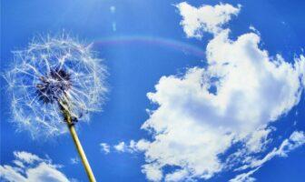 кульбабка і небо
