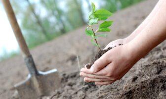озеленення країни