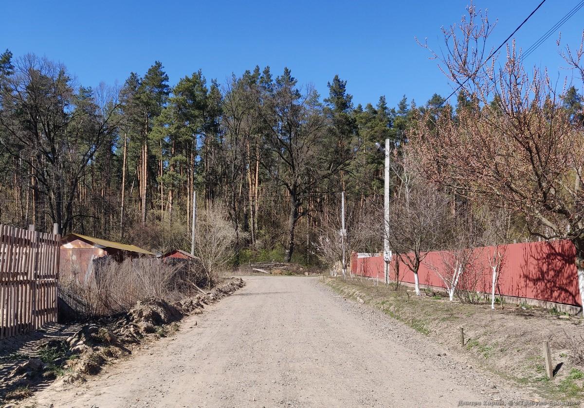 броварський ліс