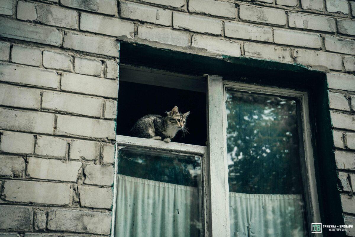 кіт вікно