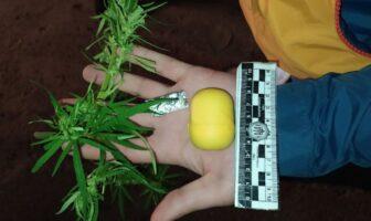 Наркотики 04.08.2020
