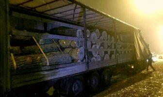 Незаконна вирубка дерев у Требухові