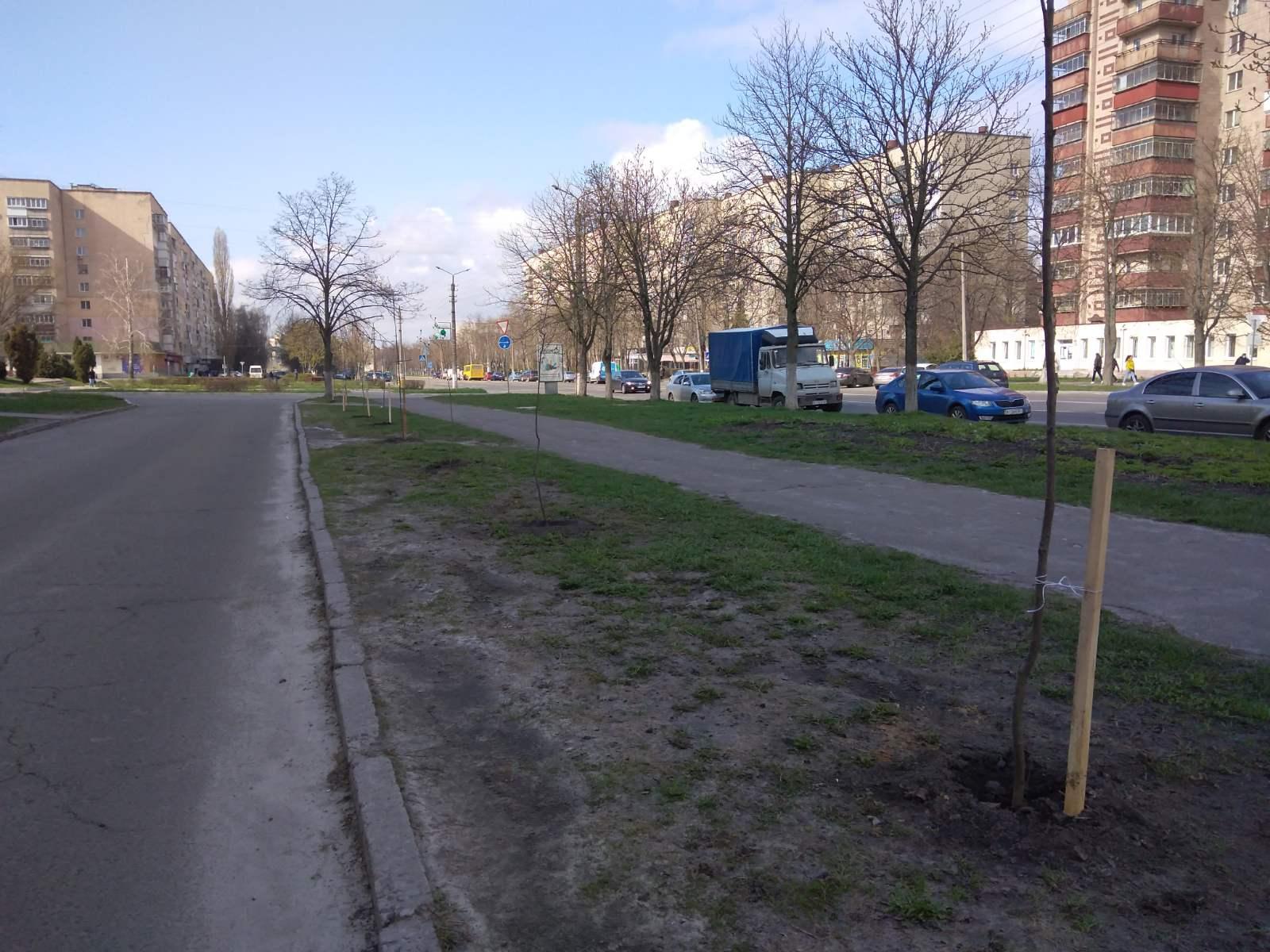 висадження дерев