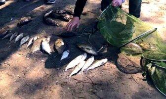 Рибоохоронний патруль, рейд, Десна