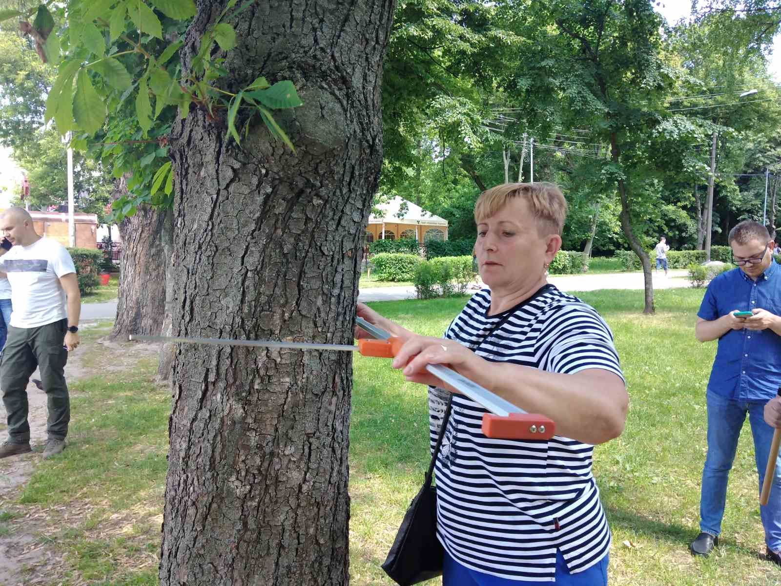 чипування дерев