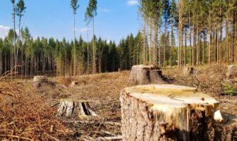 Вирубка та охорона лісу, ФОТО – Володимирець.City