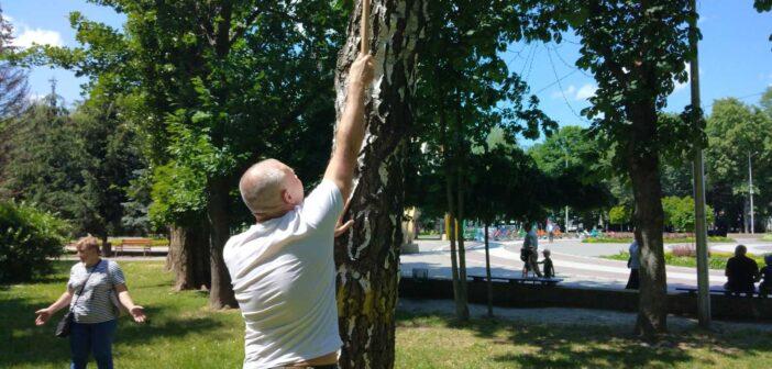 У Броварах розпочали чипувати дерева. ФОТО