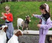 Літні табори від VseЗнайки: оптимальне поєднання цікавого та корисного