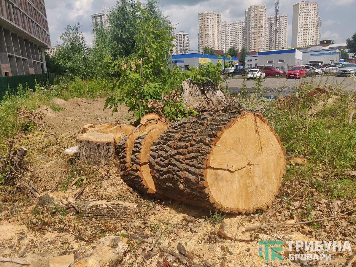 спиляні дерева