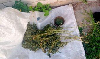 наркотики, конопля в Плоскому, фото - поліція