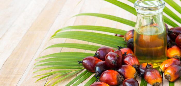 Використання пальмової олії в Україні хочуть заборонити: чим вона небезпечна